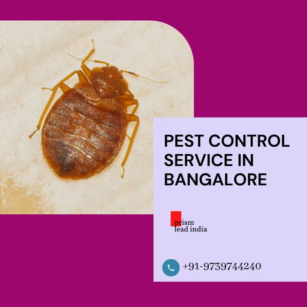 Bed Bug Pest Control Service in Domlur