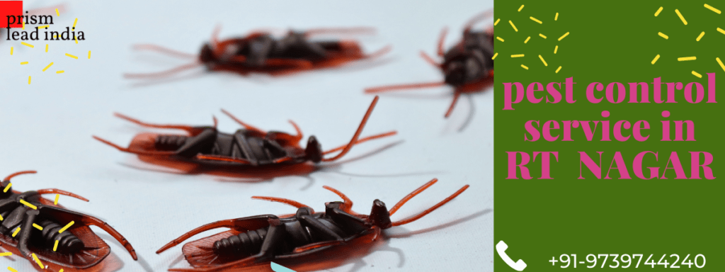 Pest Control Services in RT Nagar