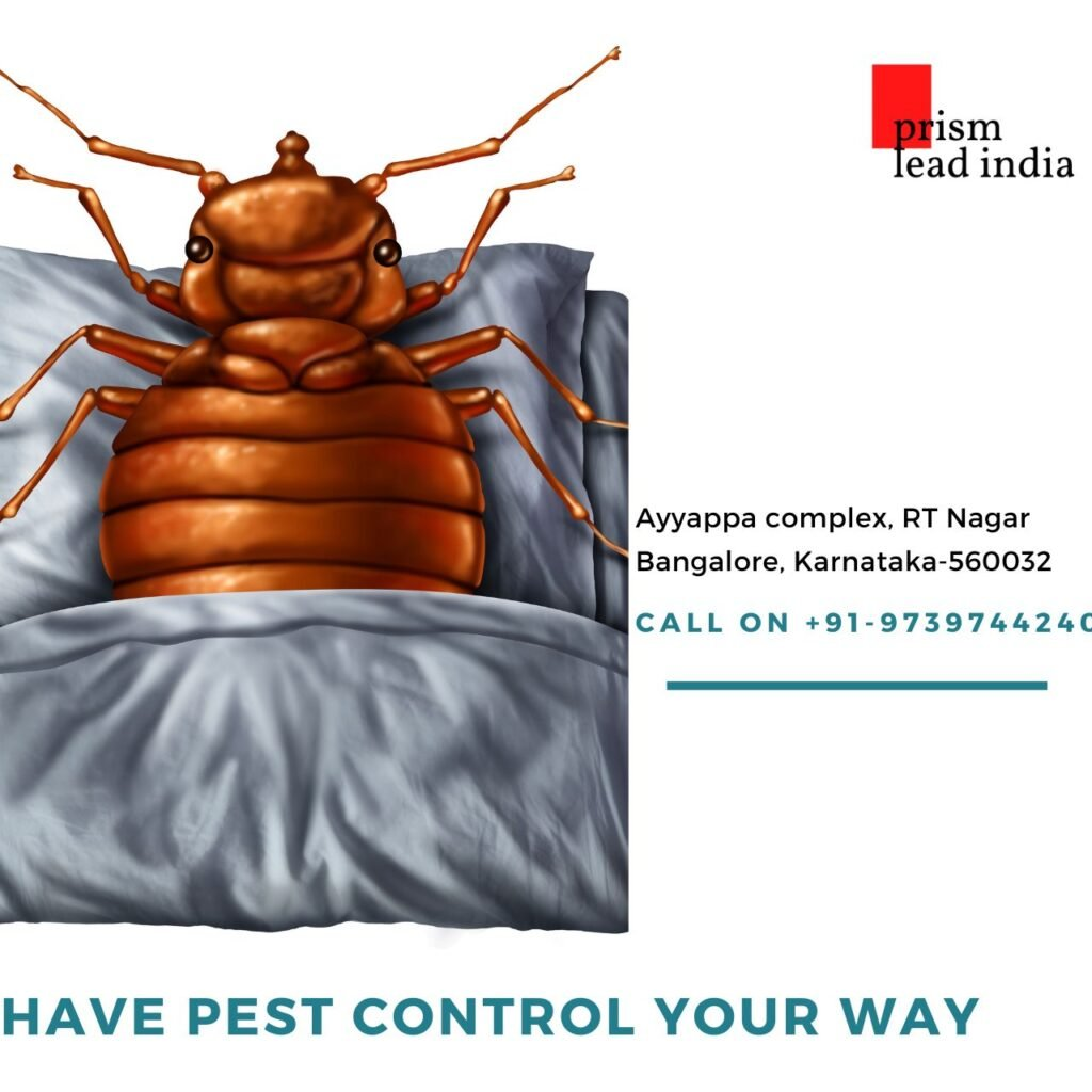 Pest Control Services in Benson Town